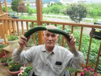 おいしい夏野菜!